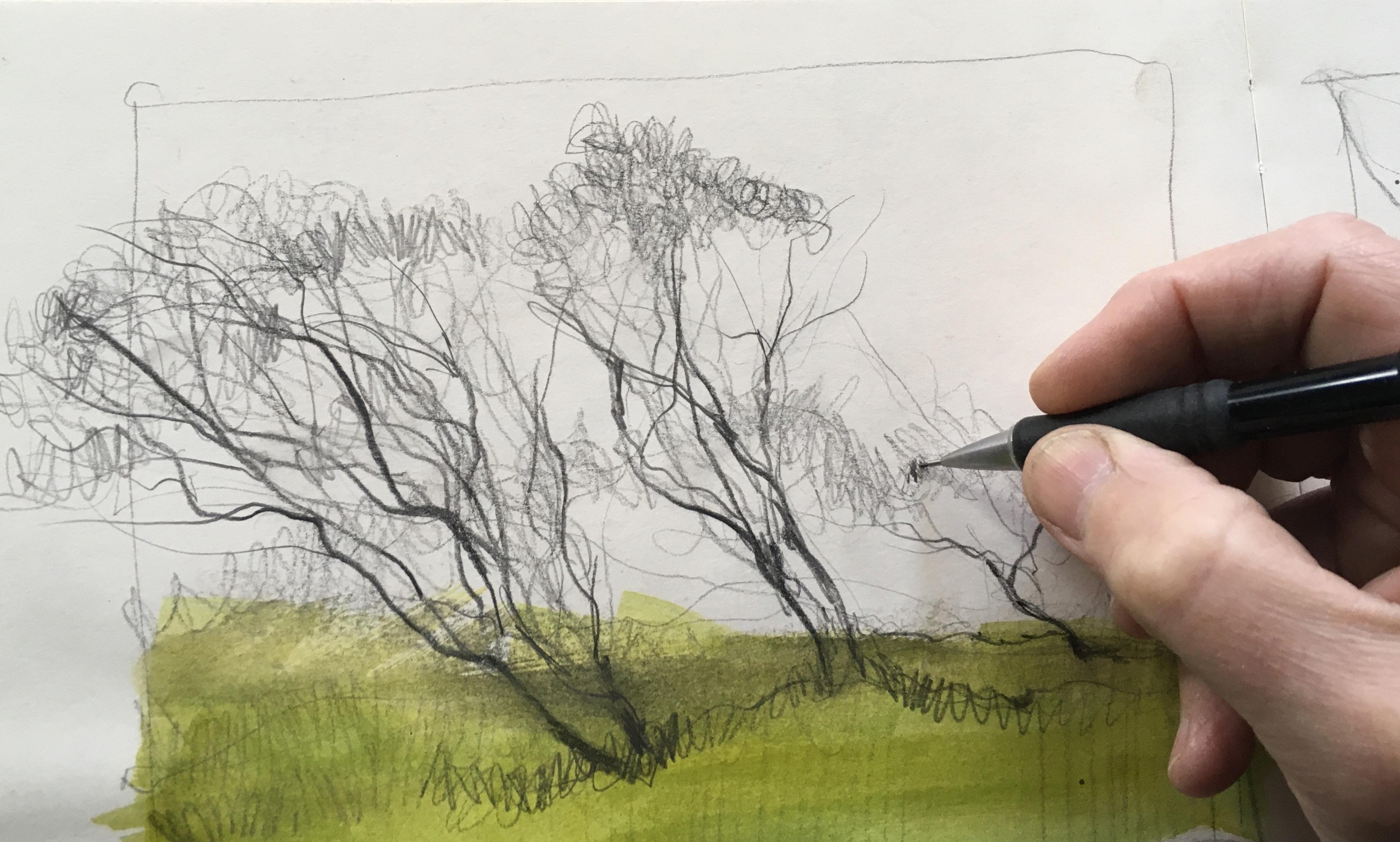 Bammeld_David_Sketchbook-trees 2.JPG