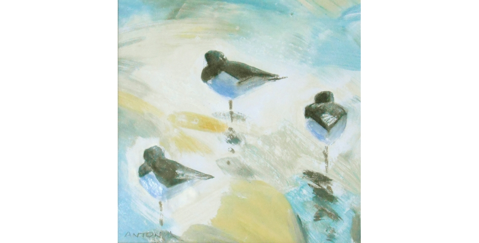 phillips - antonia - oystercatcher trio.jpg