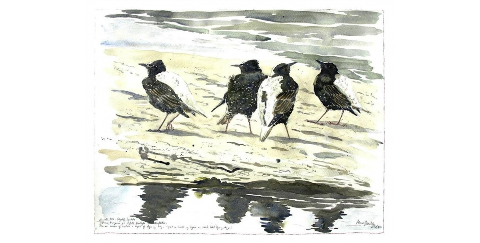 Brodde-Martin-Starlings on the mud flat, Fano, the Wadden Sea.jpg
