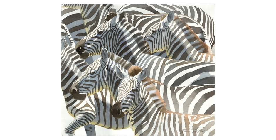 zebras_gemma_1.jpg