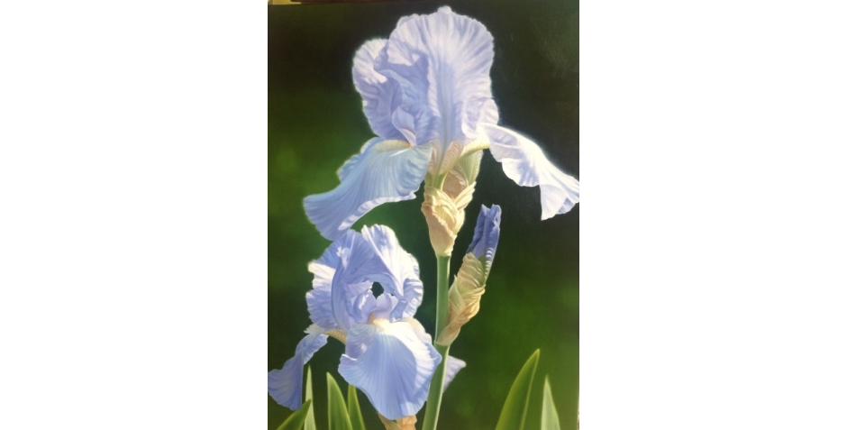 Alexander-Linda-Purple Iris.jpg