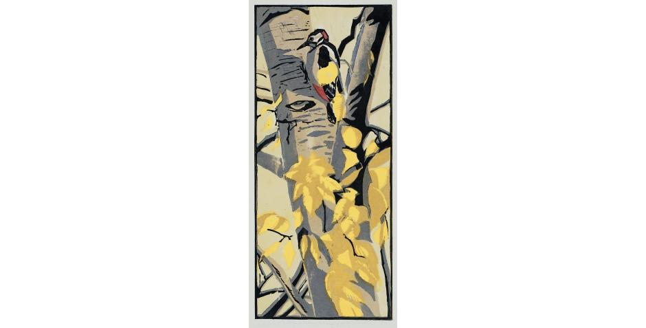 Great spotted Woodpecker.jpg