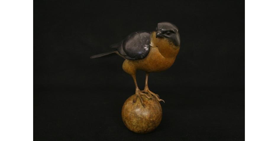 Sparrow Hawk_3.jpg