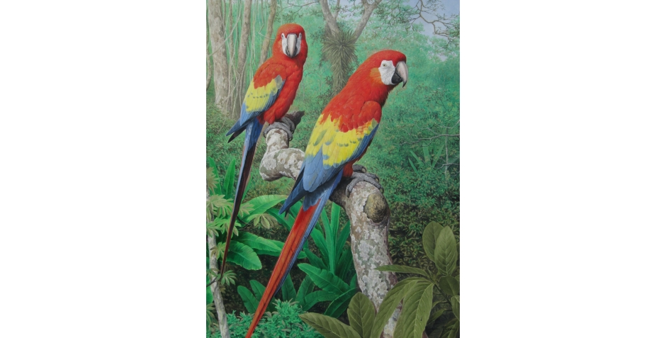 Turvey Simon    Scarlet Macaws - Amazon    .JPG