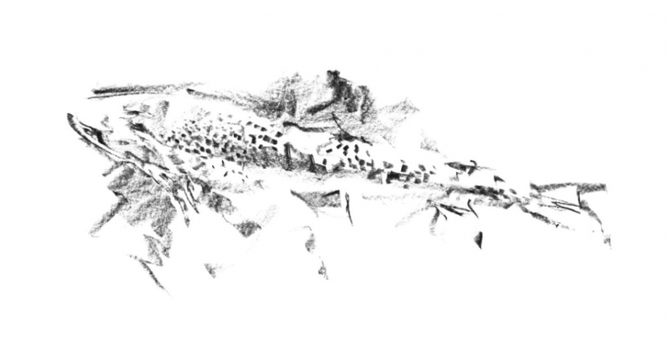 ellis.c.brown trout drawing. pastel.jpg