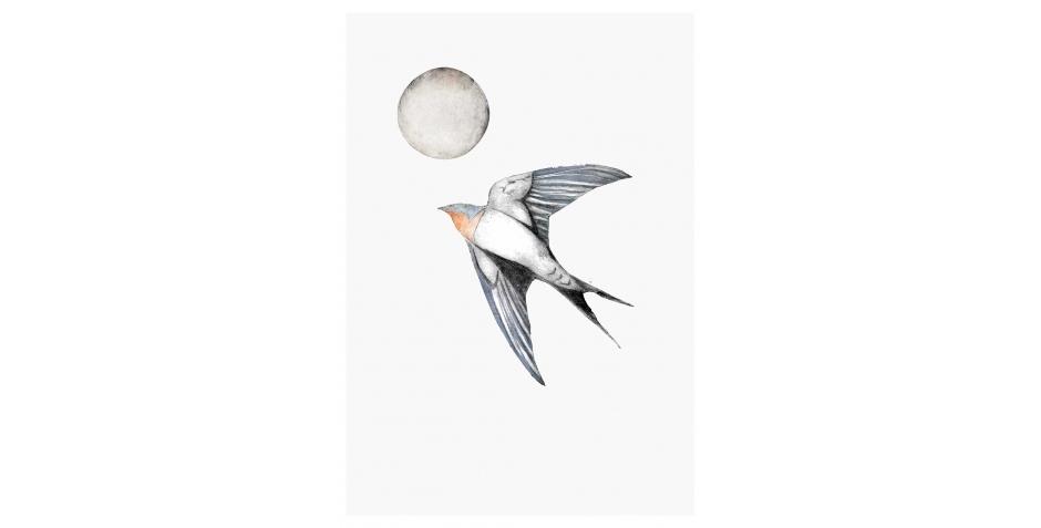 WEB-Forshall-Beatrice-Swallow.jpg