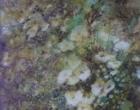 Fazakerley-Pauline-Flowers.jpg