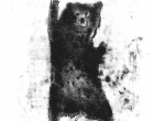 Haslam.J.Bear -monoprint .jpg