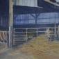 Allbrook-Colin-Dairy-Farm-Late-Sun.jpg