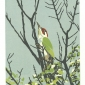 Angus-Max-The-Green-Woodpecker.jpg