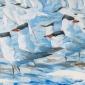Derry-Nik-Caspian-Terns-and-Sandwich-Terns.jpg