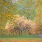 Verrall-Nick-Autumn-Green-Park-London.jpg