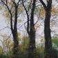 Brammeld-David-Autumn-Gold.jpg