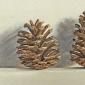 August-Lillias-Pine-cones.jpg