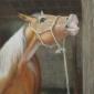 Balkwill-Liz-From-The-Horses-Mouth.jpg