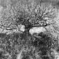 Barrowman-Andrew-Tree-Study.jpg
