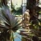 Bennett-Christopher-From-the-Orangery-at-Belton-House-35-x-45-cm-HIGHER-RESOLUTION-FILE.jpg