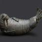 Binder-Adam-Walrus.jpg