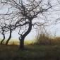 Brammeld-David-Three-Trees-(Looking-towards-the-Cheshire-Plain).jpg