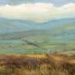 Clucas-Fiona-Curlew-on-Redmire-Moor.jpg
