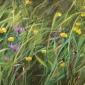 Clucas-Fiona-Through-A-Meadow.jpg