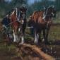 Dellar-Roger-The-Ploughing-Match.jpg