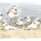 Dusen-Barry-van-Late-Summer-Sanderlings-II.jpg