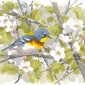 Dusen-Barry-van-Northern-Parula-in-Apple-Blossom.jpg