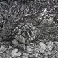 Edwards-Victoria-The-Hideout-Hermann-s-Tortoise.jpg