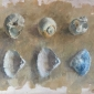 Hope-Benjamin-Sea-Shells-.jpg