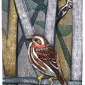 Januski-Ken-Purple-Finch-and-Hairy-Woodpecker-at-Andorra-.jpg