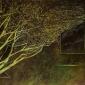 Lawler-Teresa-Urban-Tree-2.jpg