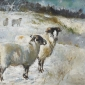 Morris-Anthony-Sheep-in-the-Snow.jpg