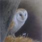 Parry-David-Barn-Owl.jpg