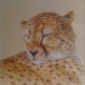 Parry-David-Masai-Mara-Cheetah.jpg