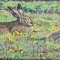 Partington-Peter-Sleepy-Hare-and-Red-Legged-Partridge.jpg