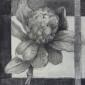 Anderson-Freda-Protea.jpg