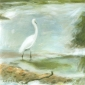 Phillips-Antonia-Morning-egret-III--River-Asker.jpg