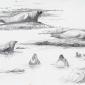 Pound-Adele-Seal-studies-Rathlin.jpg