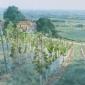 Allbrook-Colin-New-Vines-Bergerac.jpg
