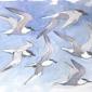 Allen-Richard-Sandwich-Tern-Studies.jpg