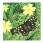 Bartlett-Vanna-Speckled-Wood.jpg