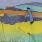 Scott-Dafila-Hen-Harrier-Orkney.jpg