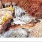 Styles-Ray-Cold-Day-Dartmoor.jpg