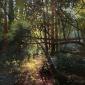 Walsom-John-Under-The-Fallen-Trees.jpg