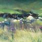 Clucas-Fiona-Oyster Catcher Langden Valley.jpg