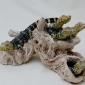 Moger-Jill-Pod of baby Caiman crocodiles.jpg