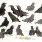 Woodhams-Ben-Ravens-Posing-And-Posturing-Around-Katniss-The-Deceased-Chicken.jpg