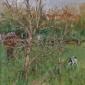 Armfield-Diana-Open-Day-Pensford-Field.jpg
