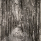 Baldwin-Janine-Silpho Forest.jpg